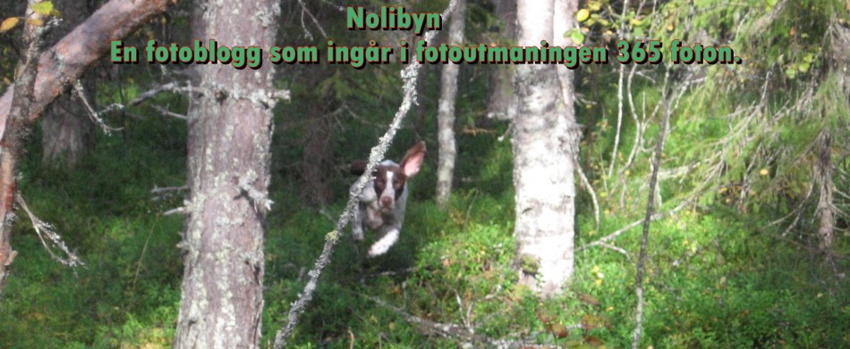 nolibyn